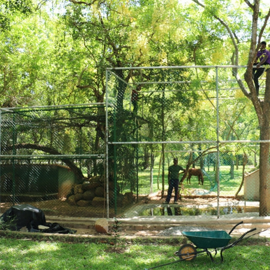 Fishing Cat Enclosure